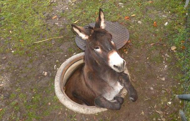 terwijl wij ruzie hadden over Zwarte Piet hebben ezels blijkbaar dus geheime tunnels gegraven http://t.co/ieH7fJdwc5