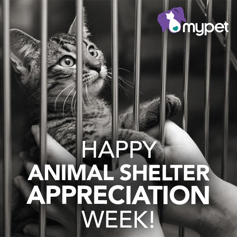 It's National Animal Shelter Appreciation Week. RT if your pet was adopted from a shelter! http://t.co/WfzqLWIb7B