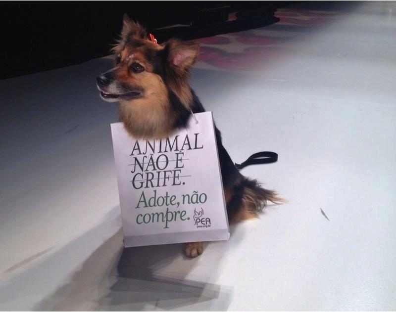 Animal não é grife: PEA e Leo Burnett realizam ação na SPFW que incentiva adoção  http://t.co/csHEoOblvD http://t.co/W0P4w6hoc7