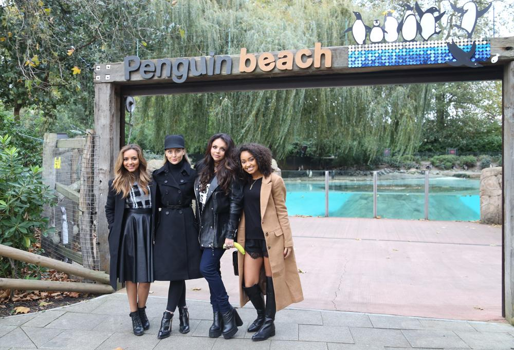 Even the girls from @LittleMix are getting in a flap about penguins today #LittleMixAtTheZoo http://t.co/wnuitvfGKK