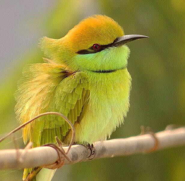 Foto: Cute Bird ._. http://t.co/KHkYTzxxAi