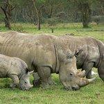 Más de mil rinocerontes han muerto este año en Sudáfrica a manos de cazadores furtivos http://t.co/x3whoYVKeo http://t.co/ZekLs5lTIQ