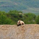 Живой уголок на ГЭС #ТГК1 в Мурманской области http://t.co/uEgis435L1