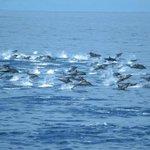 Rumbo a la isla de la plata escoltado por cientos de delfines #Ecuador via @loboruiz04 @makecuador @CanelaRadioEc http://t.co/0sipR0V1eR