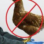 Breng geen vogels naar de #vogelopvang. Ze mogen niet worden aangenomen. #vogelgriep http://t.co/znFI4ZiDMo http://t.co/kdPU92WoQR