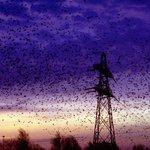 #Trekvogels makkelijke zondebok voor #vogelgriep. Is dat wel terecht? http://t.co/mscCFbeyCz #didd http://t.co/Ozj3ce5aJZ