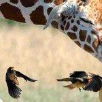 7 Zielige dieren die de vogelgriep flink te pakken hebben http://t.co/eDfRAbU2Pj http://t.co/tzkMC45kLk