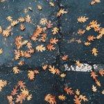 fall in sac ????????#sacramento #fall #autumn #california #cali @visitsacramento @sacstate http://t.co/eg26Rrc9tj