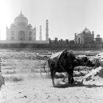 Azam Khan spotted around the Taj Mahal. http://t.co/KLayslbQDb