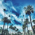 I think I have an obsession with palm trees ???? #LA #VSCO http://t.co/LIGcgBqg2t
