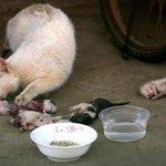 Dan inilah sebabnya neraka jahanam dicipta. Manusia sangat kejam ! http://t.co/IMBgazJ8ee
