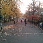 Ah, Le Tertre en automne avec sa longue allée recouverte de feuilles jaunes... Bonne journée à tous ! http://t.co/QOHWbFFAtc