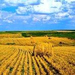 В регионе отмечают День работника сельского хозяйства!С праздником!Ваш труд бесценен, в Ваших глазах красота полей!) http://t.co/GxsOby8l3u