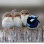 Als ondernemer is het noodzakelijk dat jij je durft te onderscheiden! Durf anders te zijn... http://t.co/HboJytraQy