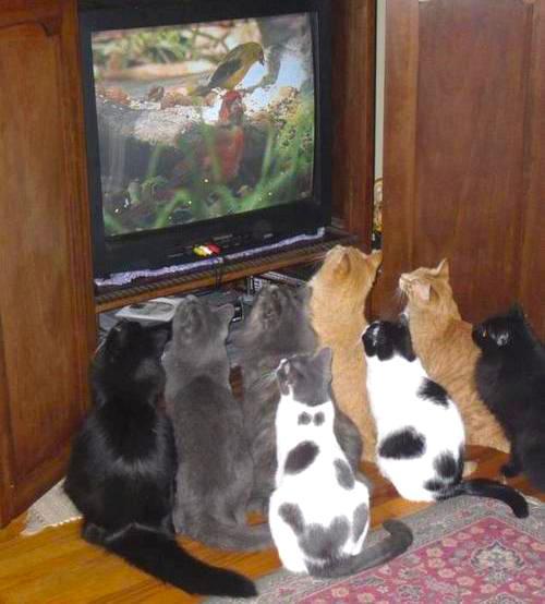 #МУЗКалендарь Сегодня Всемирный день телевидения! Поздравляем наших коллег, конкурентов и самих себя, конечно же ;) http://t.co/m6mXxVI604
