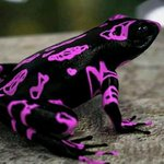 The endangered Costa Rican Variable Harlequin #Toad (clown frog) looks like it was designed in the 90s: #biodiversity http://t.co/eQEXMzFd1n
