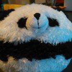 Denne pandaen er fornøyd med #statsbudsjettet. http://t.co/U1xYWR2QsT