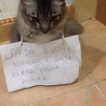 Ni ha, how to give a lesson to your cat. http://t.co/AgifxcvC4x