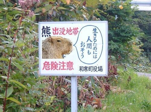 確かに(笑) RT @ID420 まずオマエは熊と違うやろ http://t.co/CzRyRHB2GX