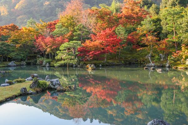 曹源池庭園の紅葉状況 [11月10日現在]。(2014.11.10) http://t.co/jPLTH7S2Ho
