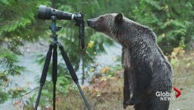 One of the more amusing photos of the week: This snapshot of a grizzly bear 'photographer' http://t.co/sUNQXJ4vcT http://t.co/he04y57RMQ