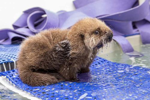 OFFICIAL PETITION: Name Otter 681 #Bears head coach. http://t.co/cTjVe0h6tk http://t.co/vcHmf3DYRj
