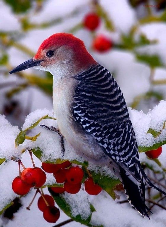 """Great woodpecker pic Via """"@AnaGtz79:.. ☺ http://t.co/1dJVWGIlrp"""""""