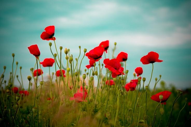 Lest we forget. A heartfelt thank you this #RemembranceDay http://t.co/53ZWrckNnE