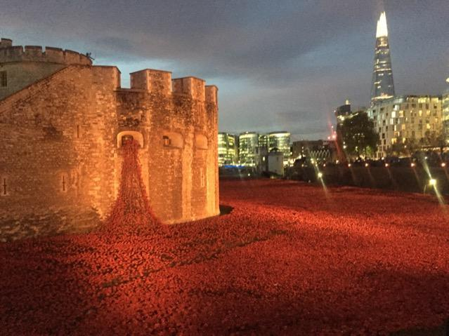 """Poppies at dawn this morning. http://t.co/ktu78IUKG0"""" absolutely incredible, unbelievable ...."""