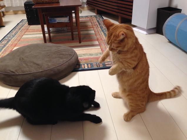 うに vs ひじき ファイ!!! http://t.co/kuzN3UwzuZ
