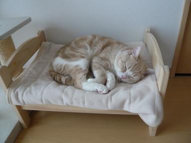 2000円で買えるIKEAの人形用ベッドが猫にピッタリ! - 画像まとめ http://t.co/CD1s7g2eUW http://t.co/CiW6uyuSZT