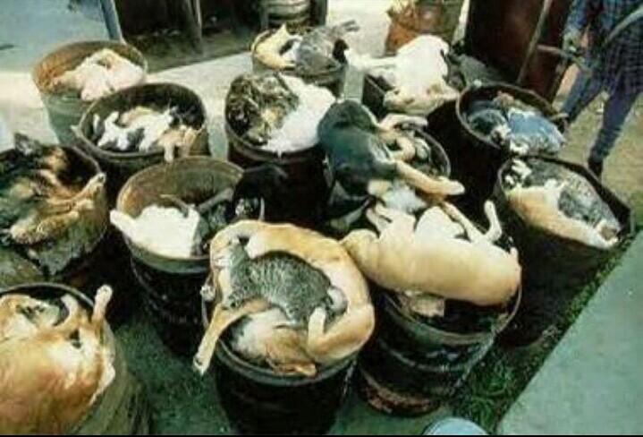 @bana_dogcat @yukko16h @macha_daichi @y12m124 保健所だけはやめましょうよ http://t.co/mTK4LkzkFg