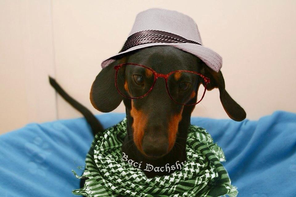 היי מירי רגב, אני בא לנהום בכנסת! http://t.co/Cg5nwgLjlX