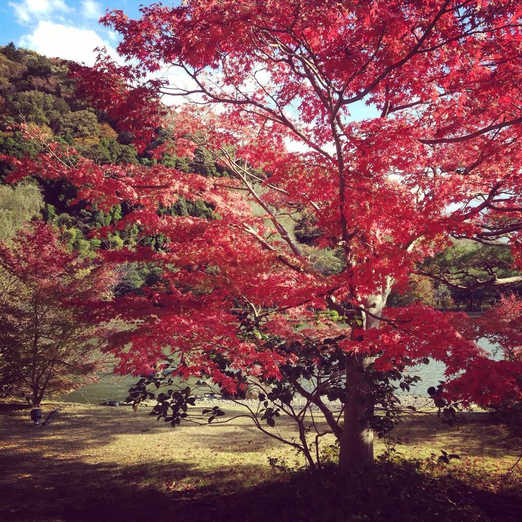 福島県、初めて来たけど       本当にいい所☺️💕💕  出会った人たちも、みーんな優しかったし、行ったところすべて素敵で、たくさんの感動がありました🐶💖✨  あしたのロケもがんばるぞ❗️ http://t.co/e293cCroXY