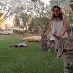 Kitten therapy is almost certainly the cutest way to deal with stress. http://t.co/MdGYsRPkFL http://t.co/luaHblk547