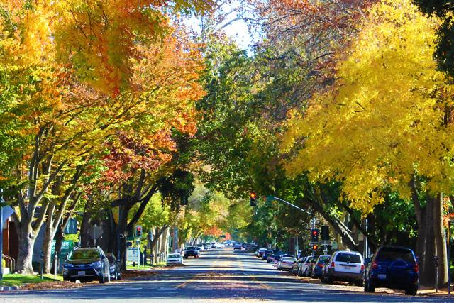 The best metropolitan city in #California to enjoy fall's colors? #Sacramento wins it! http://t.co/Oz4pQaG2at http://t.co/kMy067GSTO