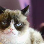 Grumpy Cat in SF today for unveiling of holiday pet adoption window at Union Square Macys. http://t.co/XYAQsqnrg2 http://t.co/4lO8NAWxJ7