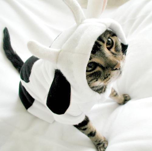 I'm a cow...promise. #FunnyFriday http://t.co/ZJOKe7wYie