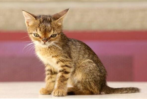 A down syndrome cat, he's adorable: http://t.co/dPTnXHnNXj
