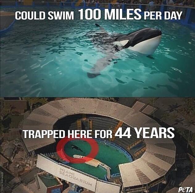 Lolita's sad life story. #FreeLolita #EndCaptivity @oceanCRIES Boycott @MiamiSeaquarium http://t.co/SxVIELVD0K