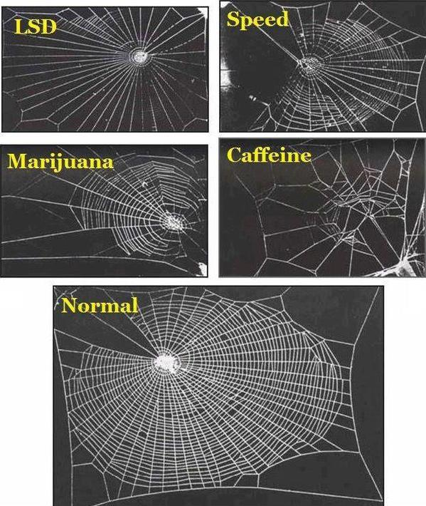 The effect that various drugs have on the web building abilities of the common garden spider. http://t.co/t15G6DnJhk
