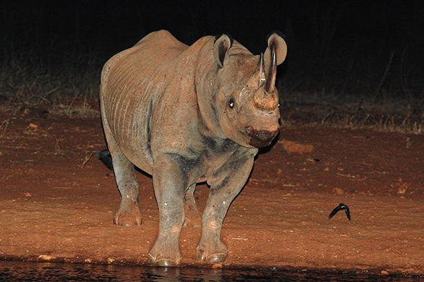 ACTION: Still a chance to change a #blackrhino's fate: http://t.co/m9KiIK2MN1 http://t.co/HwelV8tEnD