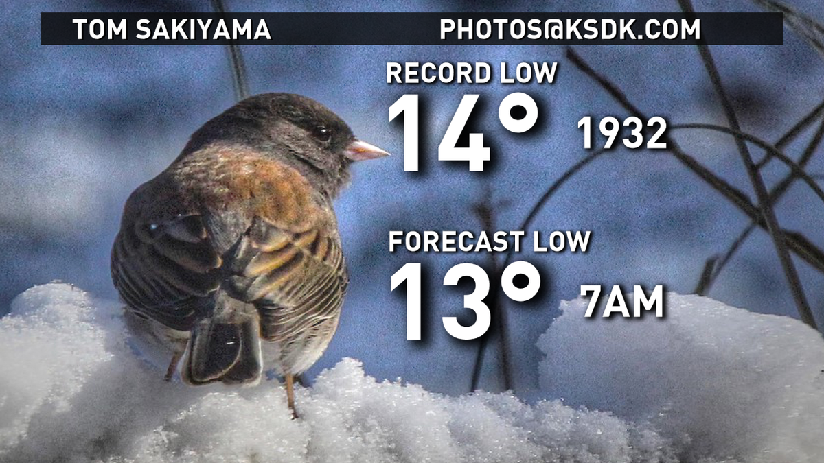Bree Smith (@BreeSmithWx): We could break an 80 year record this morning... which breaks my freezing heart. #ksdk #stlwx http://t.co/4l2GB0fhH0