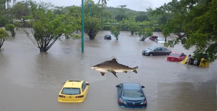 REPORTAN la vista de un tiburón en las calles de Villahermosa, TOMEN PRECAUCIONES. http://t.co/3B5t9ftuQa