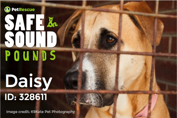 40% of dogs and 80% of cats who enter the pound system are killed. We're going to change that:    #safesoundpounds http://t.co/JS1MxOpuXO