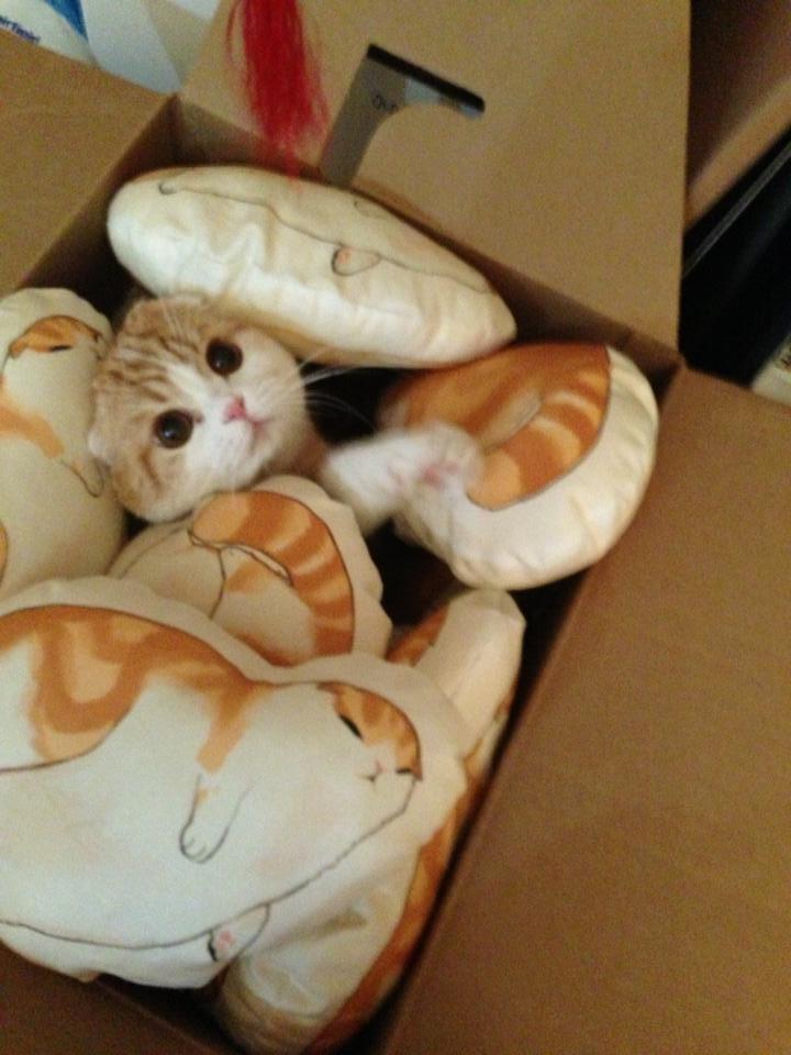 @AliceRadley I give you: a cat named waffles! http://t.co/u42rbgmOFy http://t.co/49mUa1evi3