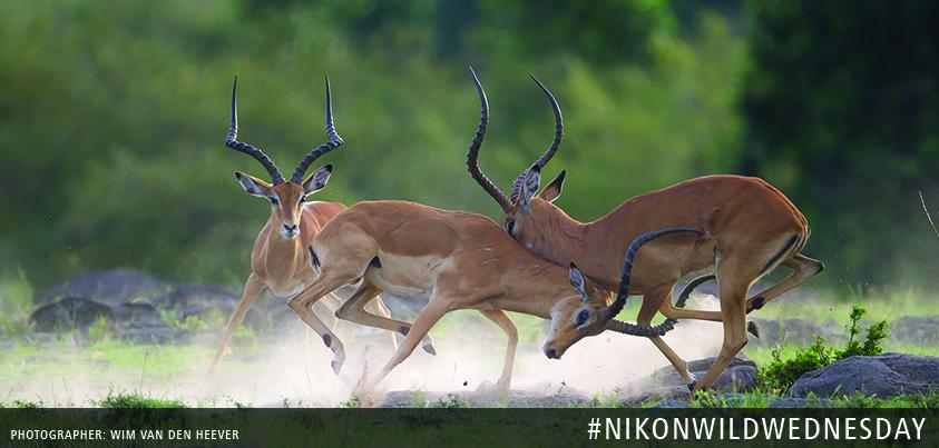 Show us your best wildlife shots with #NikonWildWednesday http://t.co/tpLsnLK1Kg