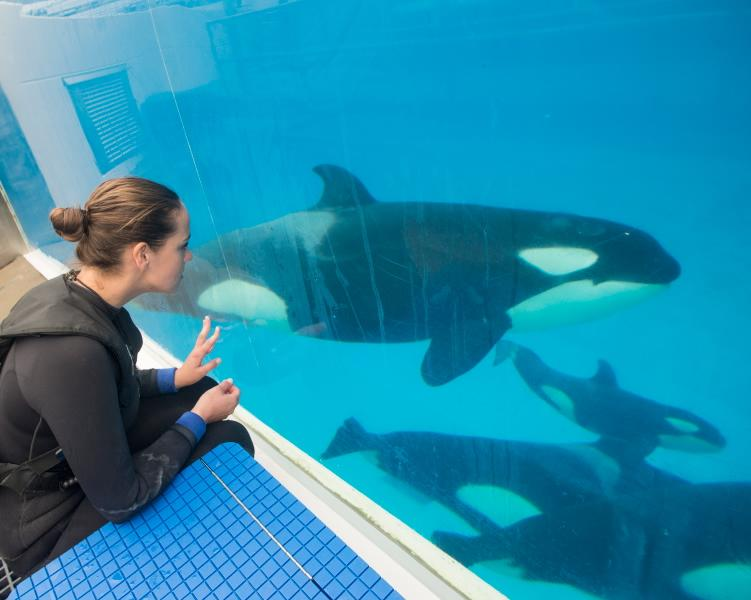 Grandma Kasatka was there to ensure all went well w/ 'little' Makani edging in to get close as possible! http://t.co/L3xznmQIRF