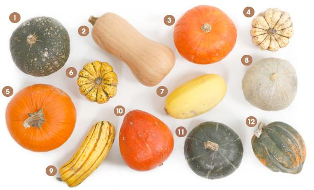 Your visual cheat sheet to all 12 varieties of winter squash (recipes incl). http://t.co/aqnLjD000u via @epicurious http://t.co/ieCPLHSCfI
