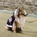 Miss Rev is here, and thinks the weather is great! ???? #12thMan http://t.co/SqExo2KGg0